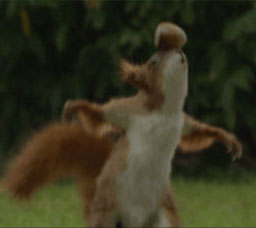 Carlsberg Sport Squirrel Commercials